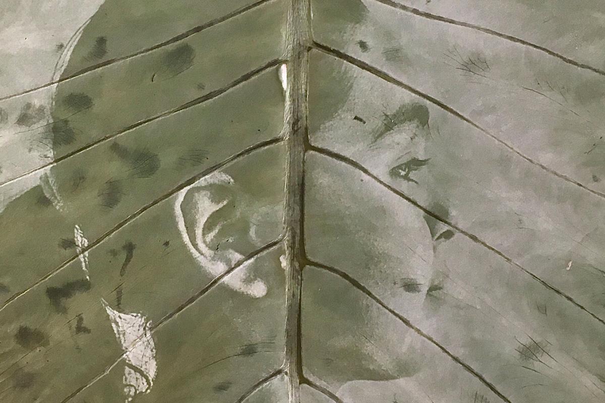 Huele a lluvia, serie de Natalia Ortiz sobre la adaptabilidad humana