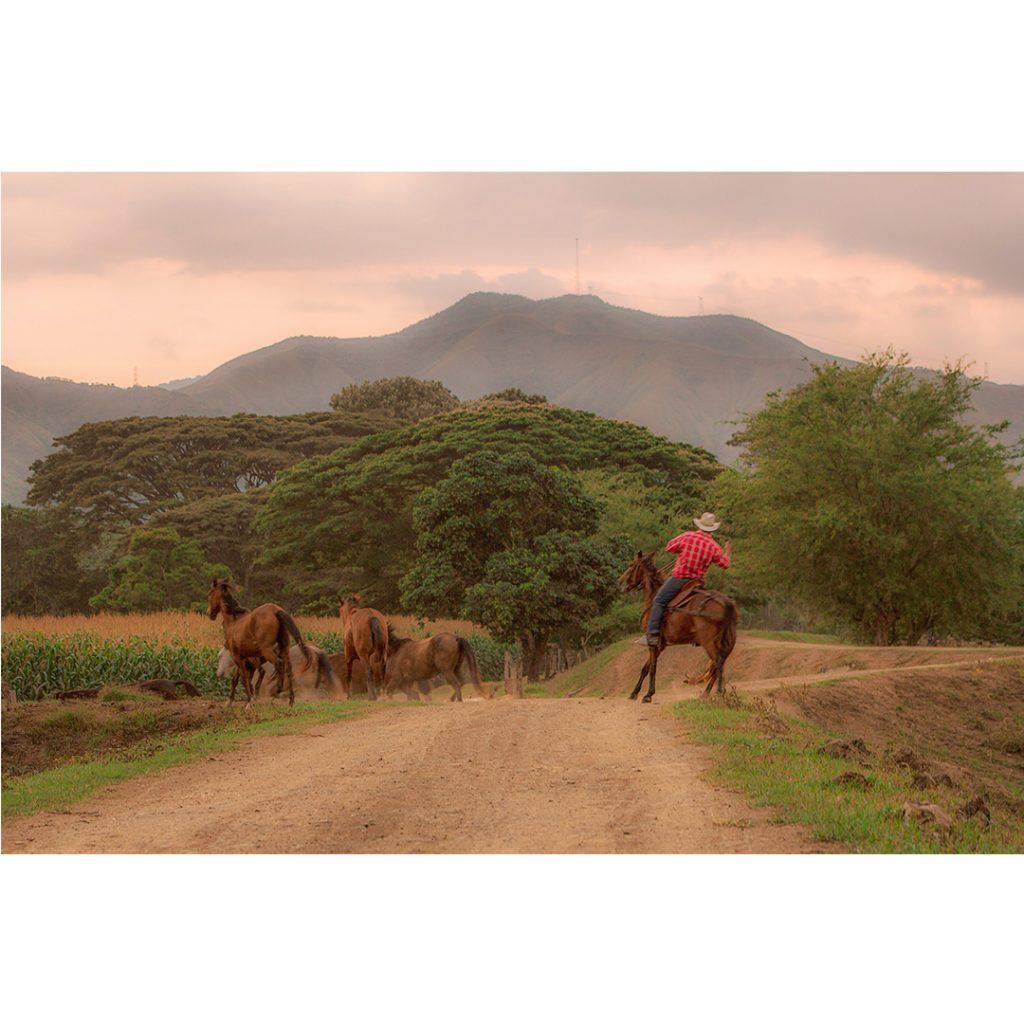 """""""Arraigos: El personaje rural"""" una serie de Daniela Gómez"""